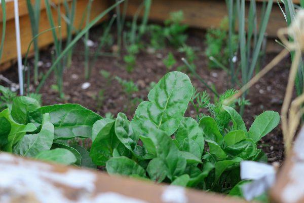 גידול ירקות בבית, כל הסודות על גידול ירקות בבית, הידרו סטאר